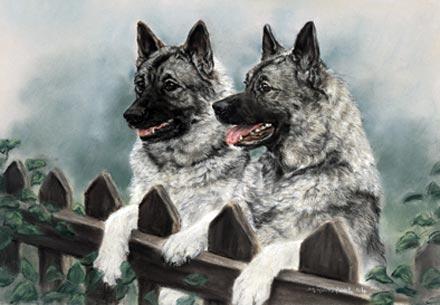 Torvmosehund,War Dog of the Vikings,Norwegian elkhound,Valhalla,vikings