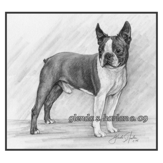 Boston Terrier,World Public Library,history