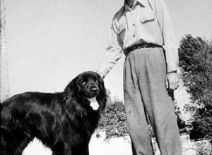 Humphrey Bogart's Newfoundland