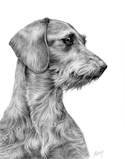 University of California Davis study,purebred dogs, mutts,crossbred,pedigree dogs