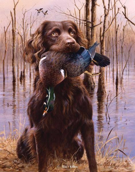 Boykin Spaniel,retriever,hunting dog,