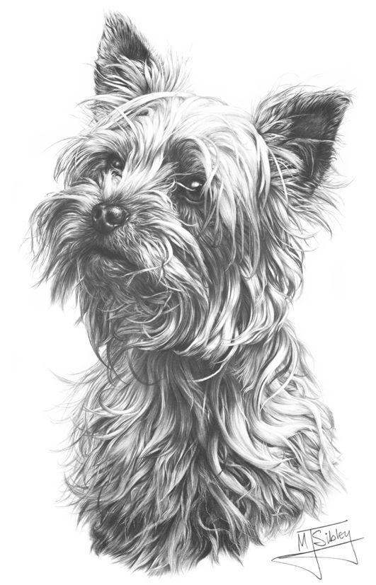 Yorkshire Terrier,Broken-Haired Scotch Terrier,Manchester Terrier,Paisley Terrier,Skye Terrier,Dandie Dinmont,Waterside Terrier,Black-and-Tan English Terrier,Clydesdale Terrier,Yorkie