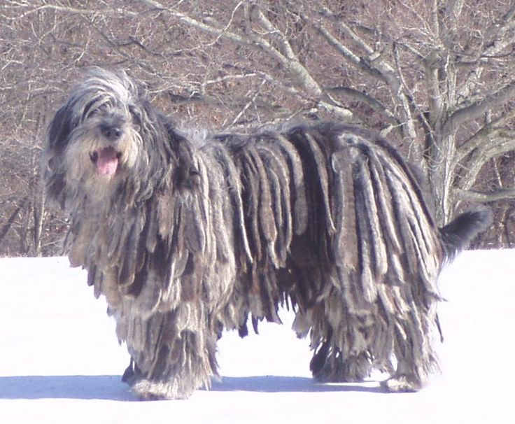 Flocks,cords,corded coat,flocked coat,bergamasco