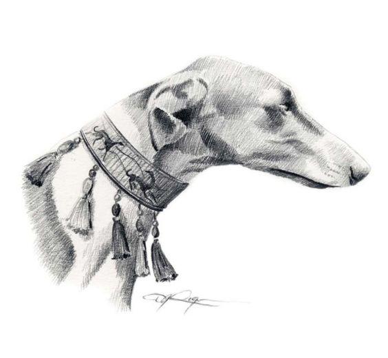 Chart Polski,Polish Greyhound,sighthound
