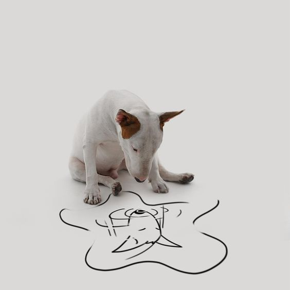 Rafael Mantesso has a lot of fun with his bull terrier, Jimmy,
