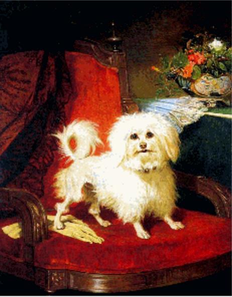 Lowchen,legend,myth,breed history
