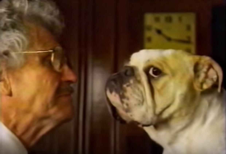 bulldog,english bulldog,TV, commercial, little caesar pizza
