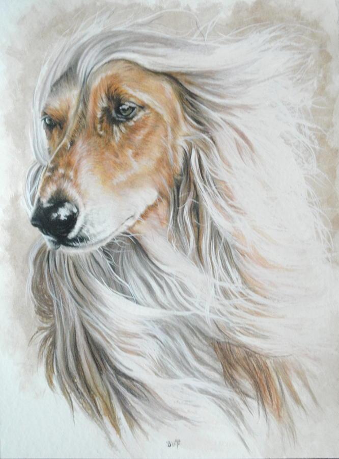 Afghan Hound,scented hound,hound,legend,myth