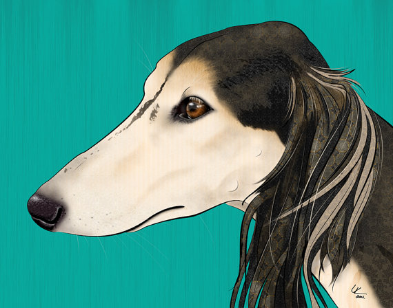saluki,borzoi,afghan hound,coat,color,marking,grizzle,domino,sable