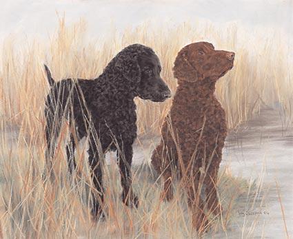 Curly Coated Retriever,nickname,Thinking Man's Retriever,hunting dog