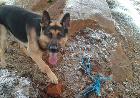 Can Police Dogs Sense Guns