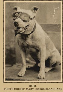 Pit Bull Terrier,Horatio Nelson Jackson,automobile,Bud