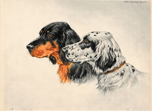 gordon setter,literature,Susanna Kearsley,Desperate Fortune
