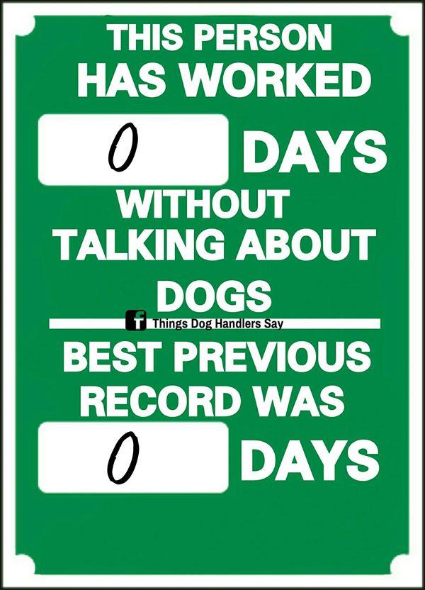 dogs, dog handlers, dog show, show dog