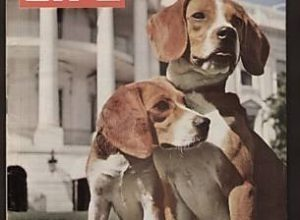The Beagle Who Became the First, and Only