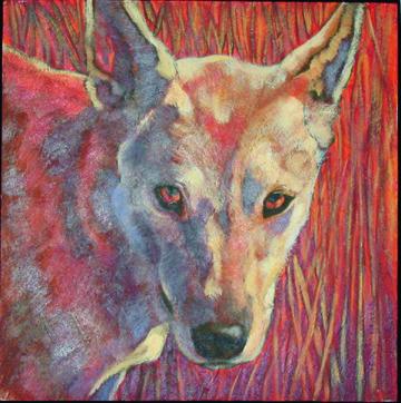 Carolina Dog,american dingo,primitive breed,