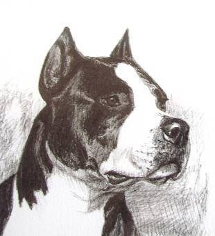American Staffordshire Terrier,American Hairless Terrier,Bulldog,seal,Alaskan Malamute,Boston Terrier,color,pattern,coat