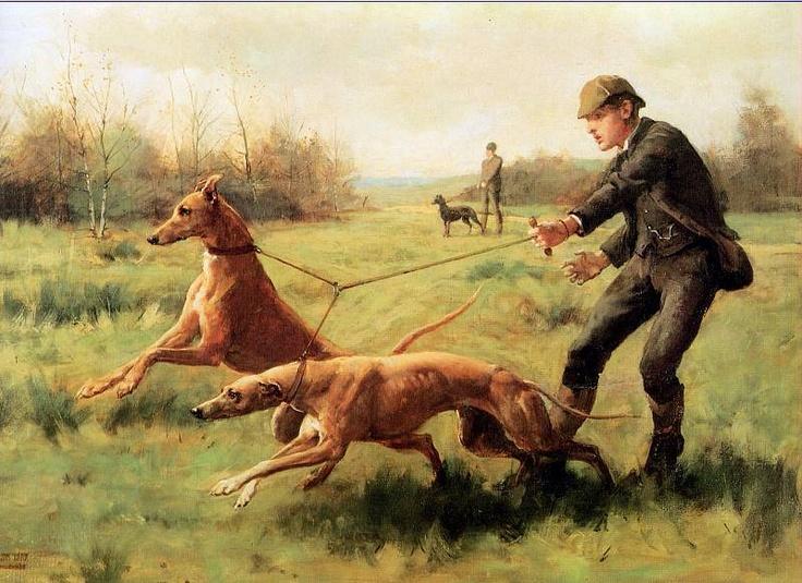 Greyhound,hound,American coursing hound,Scottish Deerhound,Irish Wolfhound,Borzoi,hotblood,coldblood,saluki