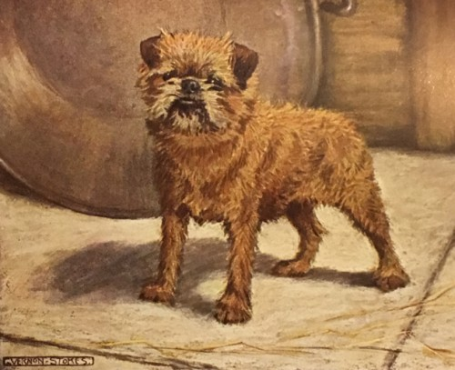 Brussels Griffon,Australian Cattle Dog,Otterhound,Shih Tzu,English Toy Spaniel,Rottweiler,bite,teeth,dentition,AKC,tongue