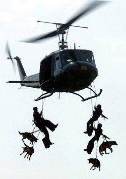 Navy Seal,Airborne Dog,war dog,military dog,german shpeherd dog,belgian malinois,labrador retriever,Tandem Jump