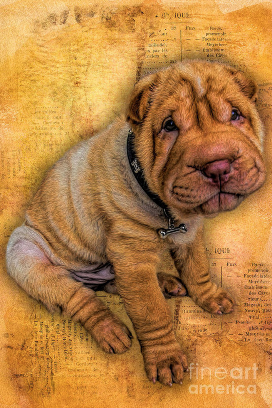 shar-pei,hippopotamus head,toad mouth,Warrior Scowl,calabash-shaped head,roof tile mouth,size