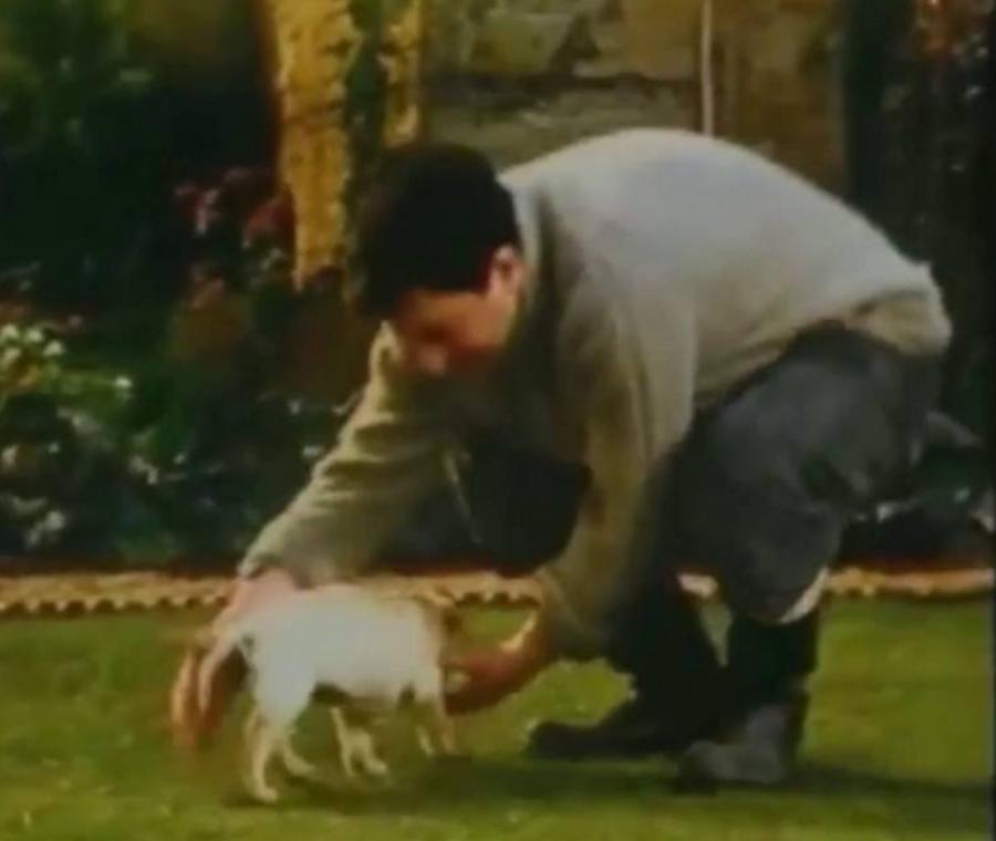 Labrador Retriever,commercial,TV,ads,