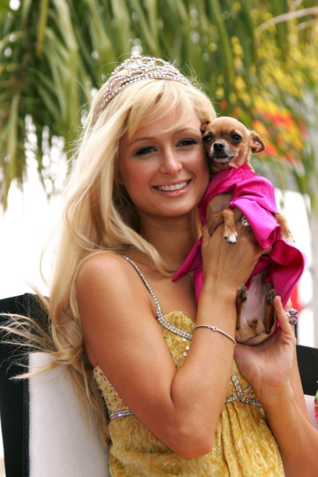 Chihuahua,Paris Hilton,Tinkerbelle,toy breed