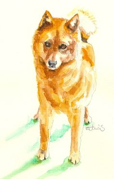 the barking bird dog,finnish spitz,barking,terrier,breeds