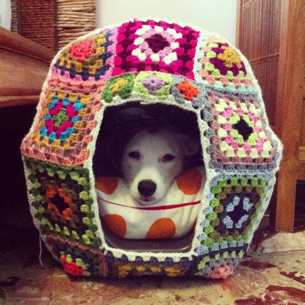yarn bomb,dogs