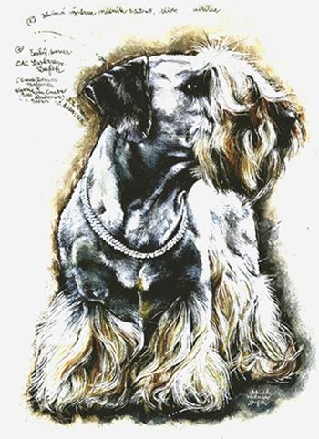 Cesky Terrier,terrier,history