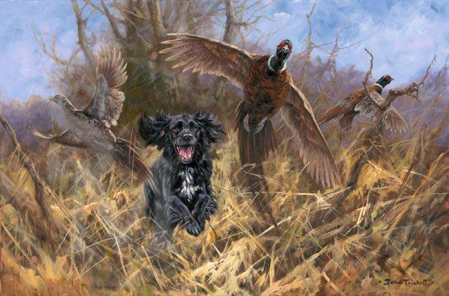 English Cocker Spaniel,hunting dog