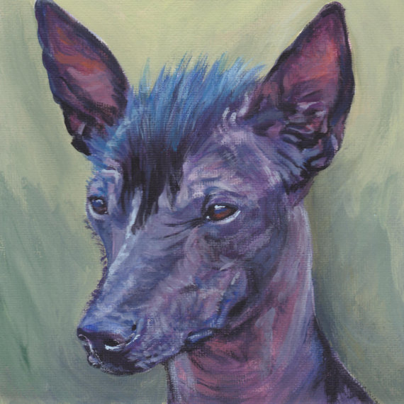 Peruvian Inca Orchid Dog,Chinese Crested Hairless,genetics, Xoloitzcuintle,American Hairless Terrier
