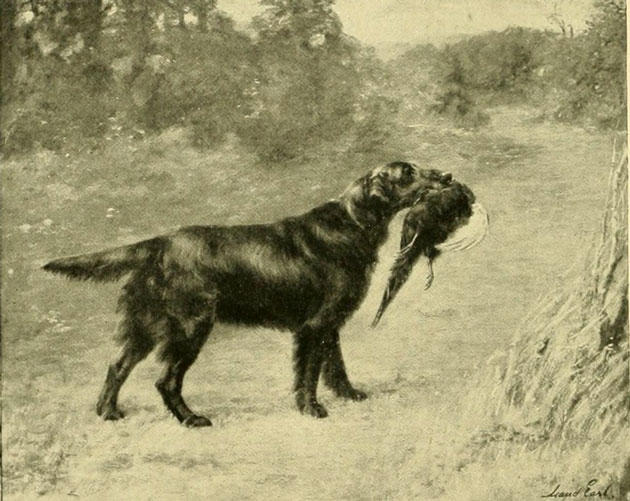 sporting dog,hound,hunting dog,structure,three finger rule