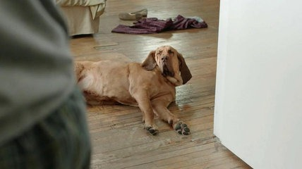 Bloodhound,commercial,TV