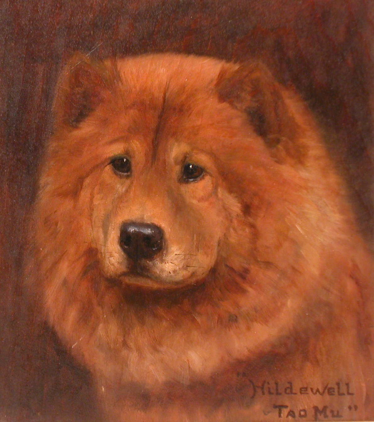 chow chow,name,history