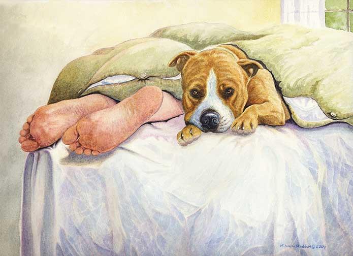 American Staffordshire Terrier, Staffordshire Bull Terrier,American Pit Bull Terriers