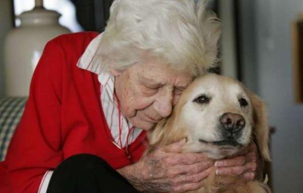 dogs,elderly,purebred dog,service dog,