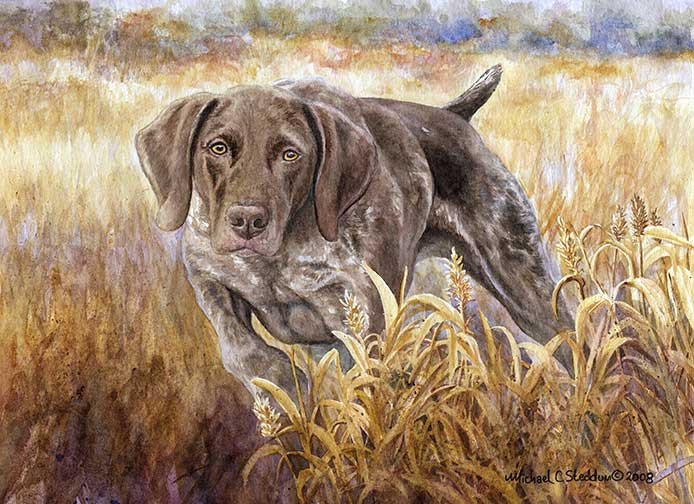 German Wirehaired Pointer,German Shorthaired Pointer,hunting dog, pointer,