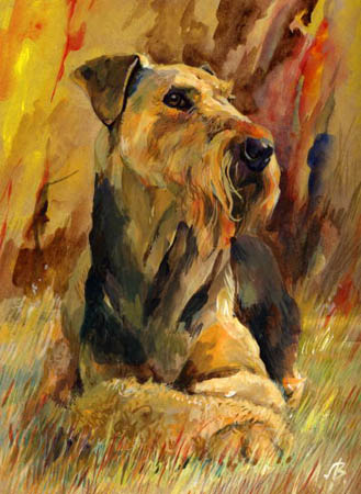 history,breed history,Bingley Terrier,Waterside Terrier,Rough Coated Terrier,Airedale Terrier