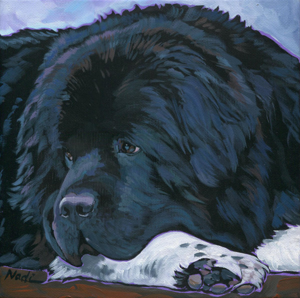 Newfoundland, color,genetics,Landseer