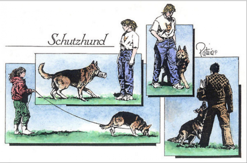 Schutzhund,tracking,obedience,german shepherd dog