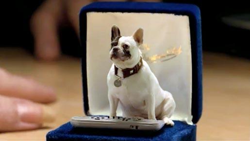 French Bulldog,commercial,TV,Walls,