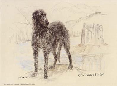 Scottish Deerhound,Vulnerable breeds,royalty,scotland,royal dog of scotland,nickname