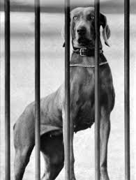 Dwight D. Eisenhower,Heidi,Weimaraner,White House