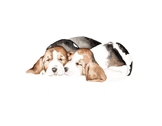 Beagle,size,