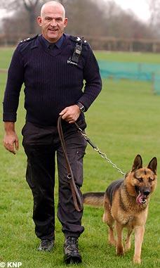 German Shepherd Dog, police dog