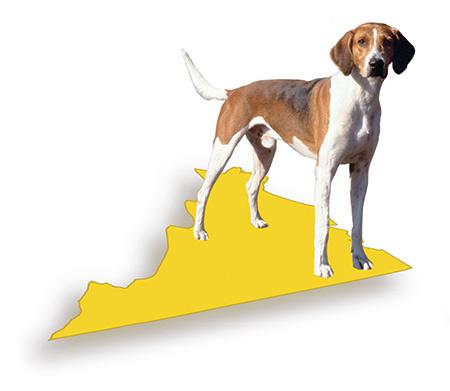 American Foxhound,state dog,virginia,george washingston