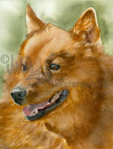 Finnish spitz,barking