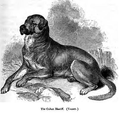 Cuban Cattle Dog,dandie dinmont,extinct