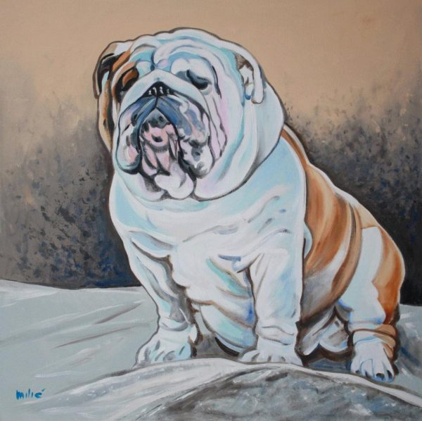 uga,state dog, bulldog,english bulldog,mascot,alaskan malamute